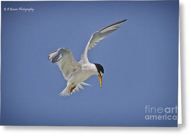 Least Tern Hovering Greeting Card by Barbara Bowen
