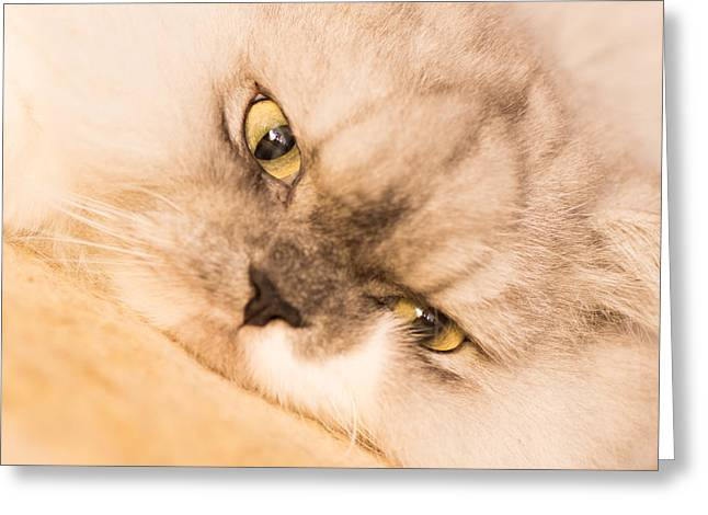 Cat Photographs Greeting Cards - Leave Me Be  Greeting Card by Tamara Dattilo