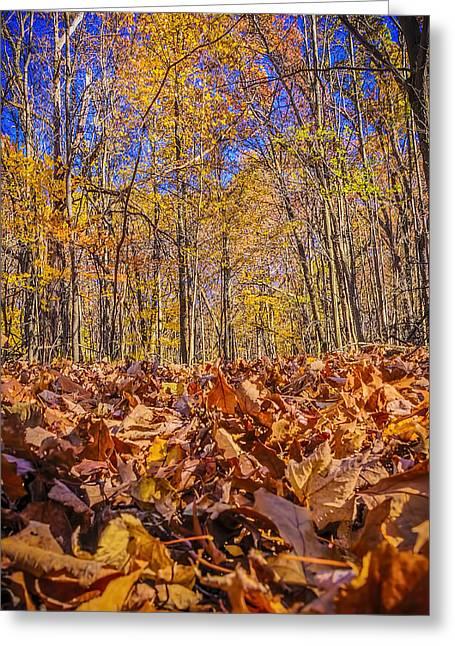 Nature Center Pond Greeting Cards - Leaves above leaves below Greeting Card by LeeAnn McLaneGoetz McLaneGoetzStudioLLCcom