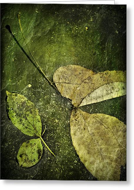 Afloat Greeting Cards - Leaves Afloat Greeting Card by Melissa Smith