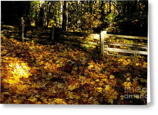 Prospects Greeting Cards - Leaves And Fence Greeting Card by Graham Foulkes