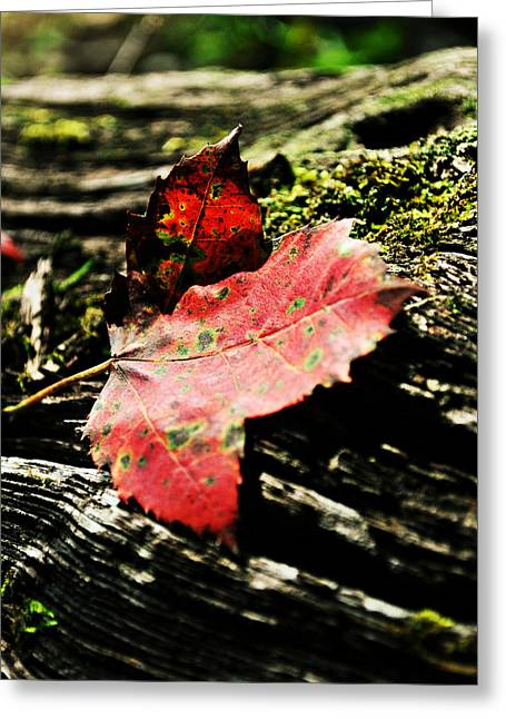 Leaves And Morning Light Greeting Card by Chastity Hoff