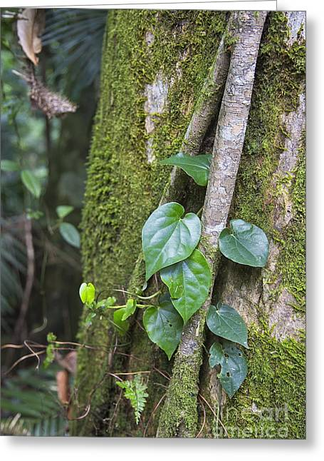 Close Focus Nature Scene Greeting Cards - Leaves and moss in rainforest Greeting Card by Wendy Townrow