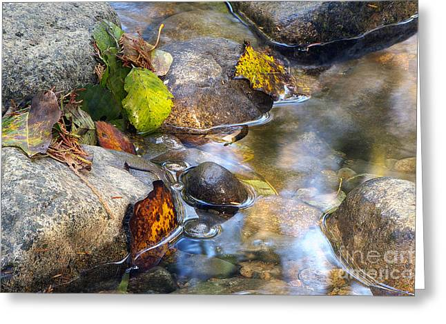 Water In Creek Greeting Cards - Leaves and Needles Greeting Card by Sharon  Talson