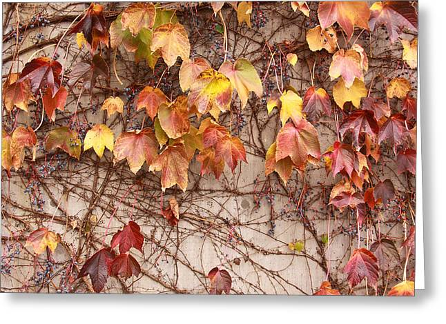 Cory Greeting Cards - Leaves and Wall Greeting Card by Tom and Pat Cory