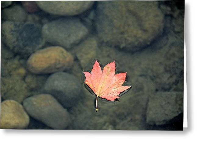 Leaves Are Falling Greeting Card by Rachel Cash