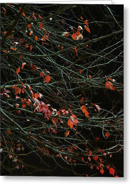Guy Ricketts Greeting Cards - Leaves By Night Greeting Card by Guy Ricketts