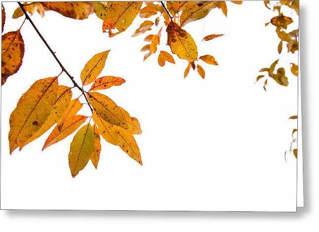 Colors Of Autumn Greeting Cards - Leaves Changing Greeting Card by Karol  Livote