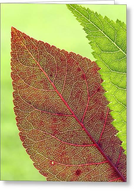 Leaves Greeting Card by Daniel Behm