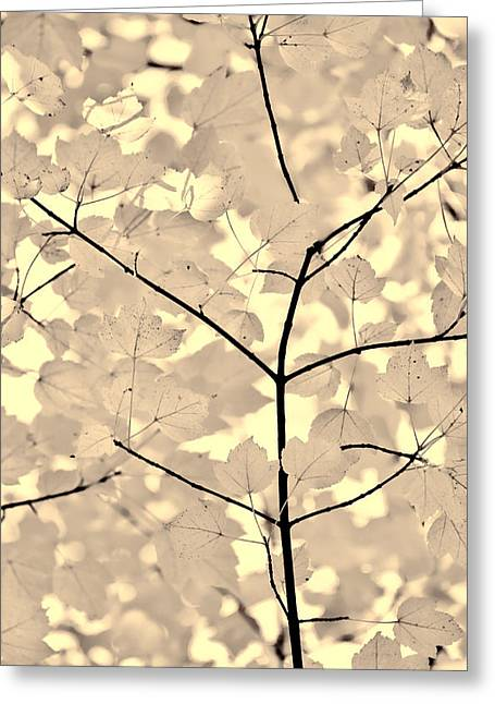 Leaves Fade To Beige Melody Greeting Card by Jennie Marie Schell