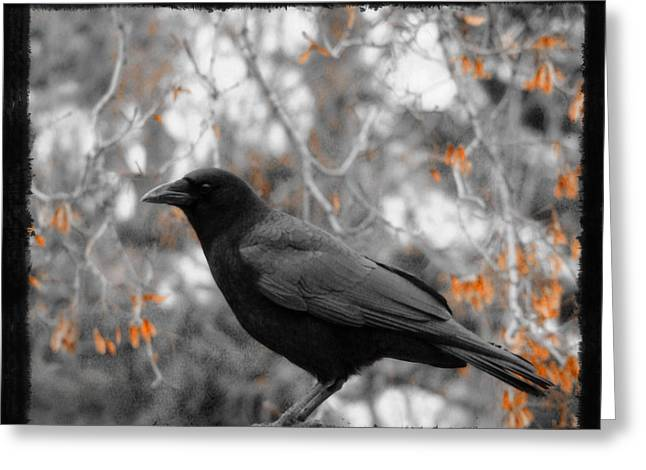 American Crow Greeting Cards - Leaves Greeting Card by Gothicolors Donna Snyder