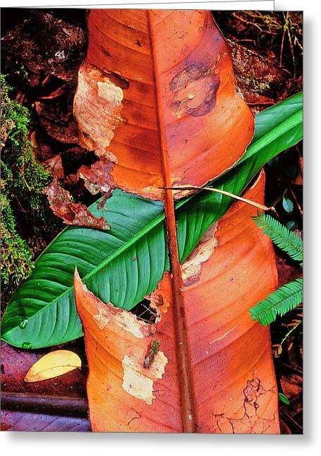 Square Image Greeting Cards - Leaves In A Forest Greeting Card by Panoramic Images