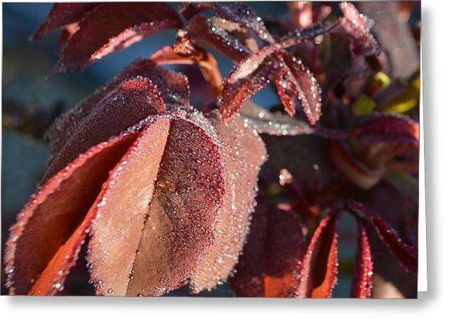 Rose Leaves In Dew 1.1 Greeting Card by Cheryl Miller