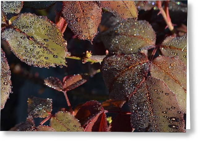 Rose Leaves In Dew 1.2 Greeting Card by Cheryl Miller