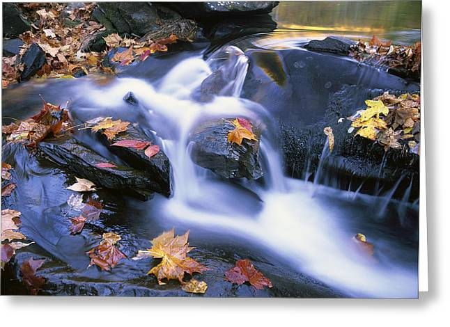 Tennessee River Greeting Cards - Leaves In Little River Great Smoky Greeting Card by Tim Fitzharris