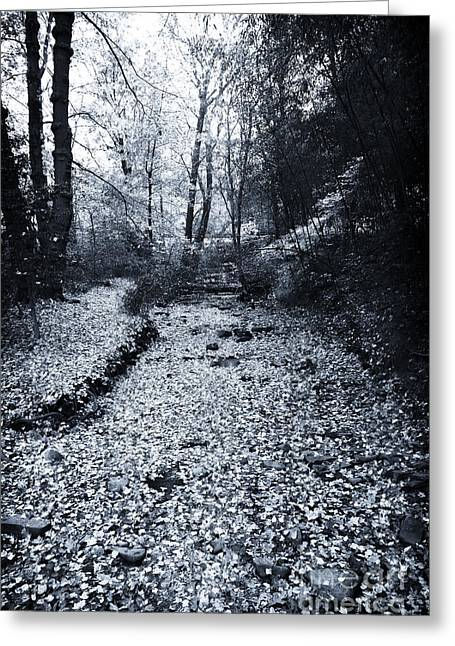 Fallen Leaf Greeting Cards - Leaves in the Stream Greeting Card by John Rizzuto