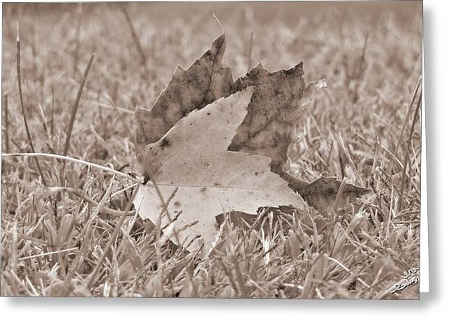 Abstract Water And Fall Leaves Greeting Cards - Leaves Greeting Card by Ira Glushchik