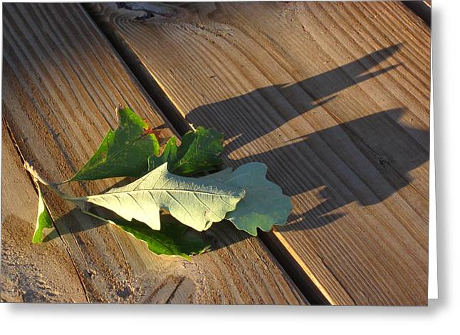 Guy Ricketts Photography Greeting Cards - Leaves Me This Resting Place Greeting Card by Guy Ricketts