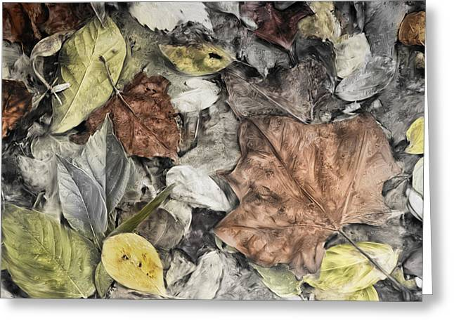 Leaves Greeting Card by Mick Burkey