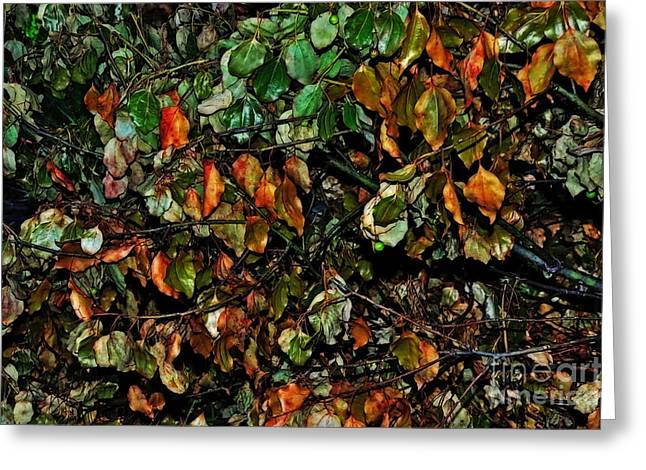 Fallen Leaf Greeting Cards - Leaves of all Seasons Greeting Card by Kaye Menner