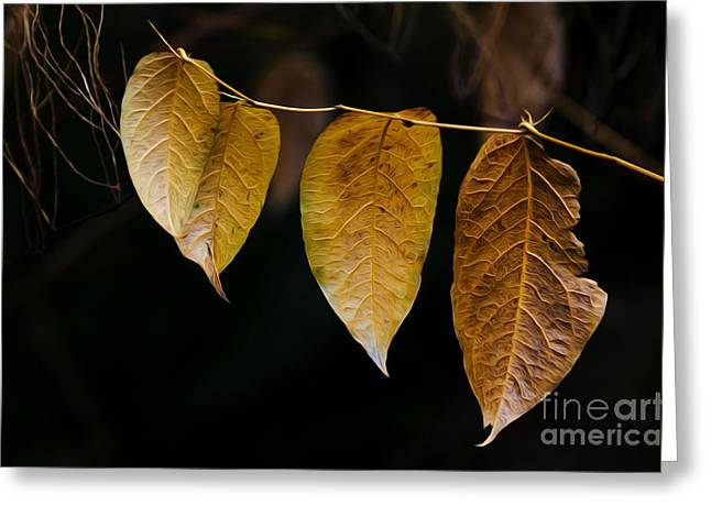 Decorate Greeting Cards - Leaves Of Fancy 1 Greeting Card by Bob Christopher