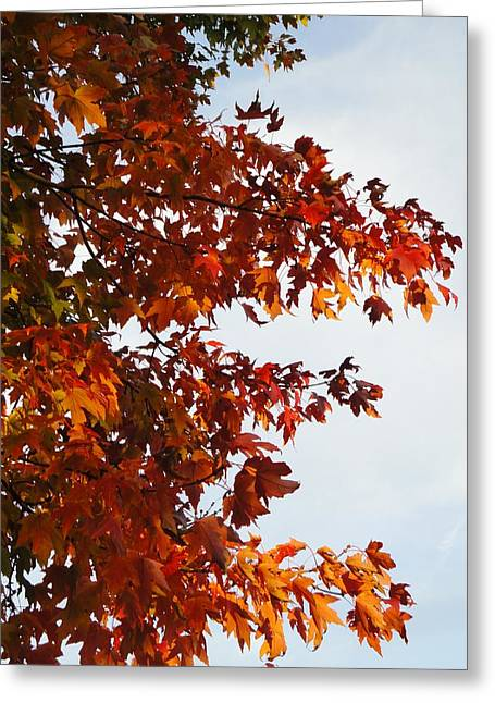 Guy Ricketts Photography Greeting Cards - Leaves of Fire Greeting Card by Guy Ricketts