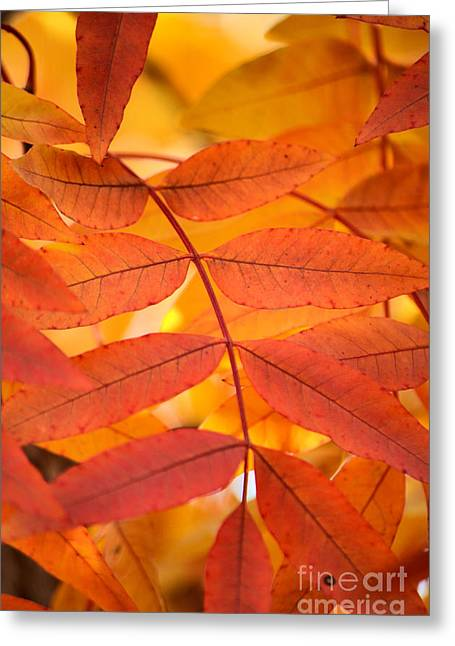 Close Focus Nature Scene Greeting Cards - Leaves of Gold Greeting Card by Deb Halloran