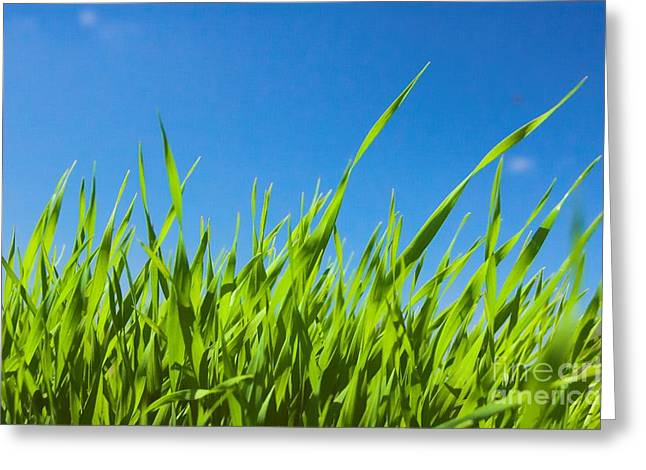 Ble Sky Greeting Cards - Leaves of grass Greeting Card by Michal Bednarek