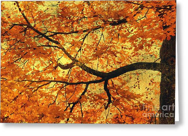 Red Maple Tree Branches Greeting Cards - Leaves of Orange Greeting Card by Darren Fisher