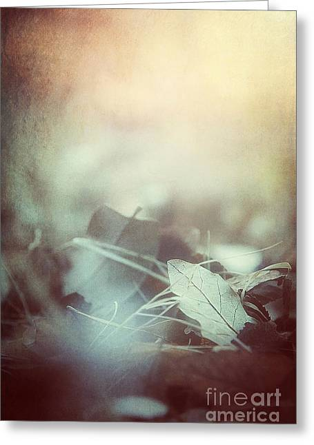 Haze Greeting Cards - Leaves of Time  Greeting Card by Trish Mistric