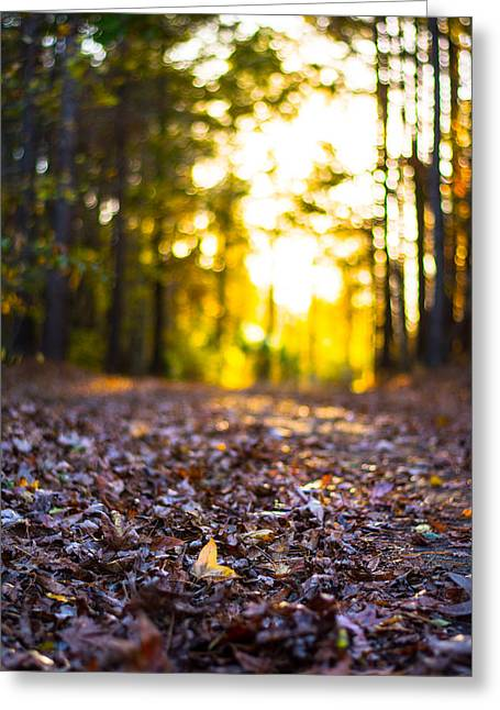 Jogging Greeting Cards - Leaves on a Forest Trail Greeting Card by Parker Cunningham