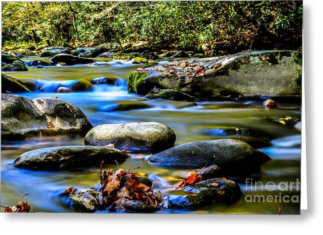 Gatlinburg Tennessee Greeting Cards - Leaves on a Rock Greeting Card by David Morgan