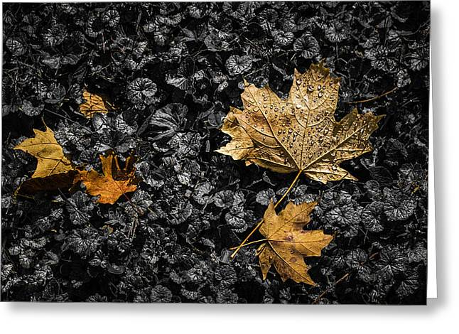 Impacting Photographs Greeting Cards - Leaves on Forest Floor Greeting Card by Tom Mc Nemar