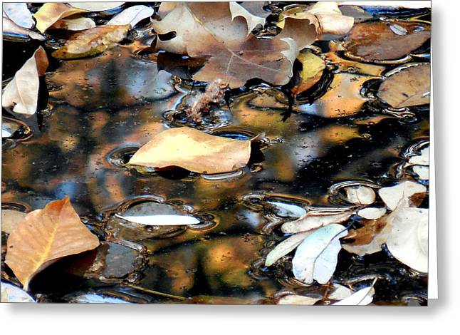 Leaves On The Waters Greeting Card by Chris Gudger