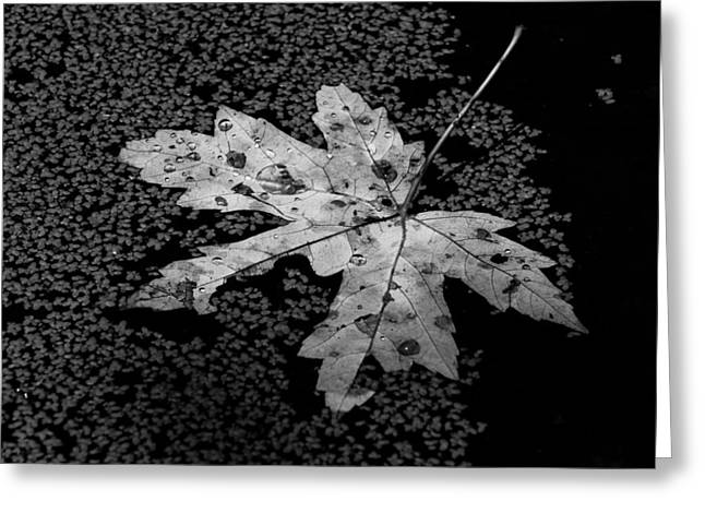 The Nature Center Greeting Cards - Leaves on water Greeting Card by Tracy Winter