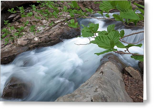 Falling Water Creek Greeting Cards - Leaves over Falling Water Creek Greeting Card by Matthew Parks