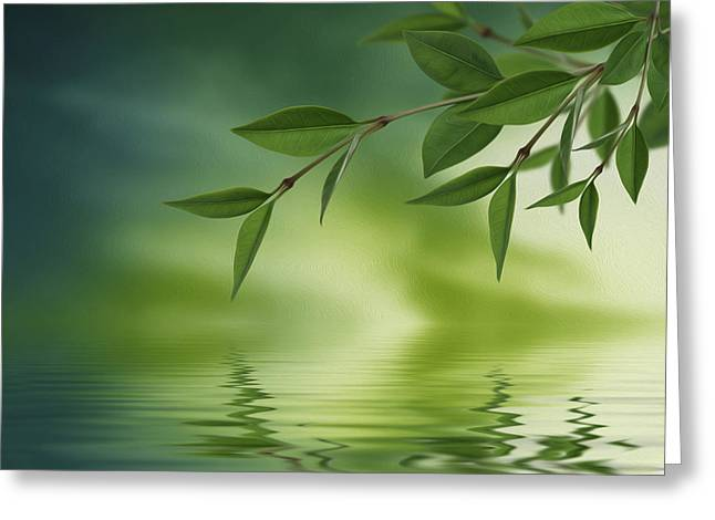 Lush Green Digital Greeting Cards - Leaves reflecting in water Greeting Card by Aged Pixel