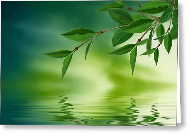 Green Leafs Drawings Greeting Cards - Leaves reflecting in water Greeting Card by Aged Pixel