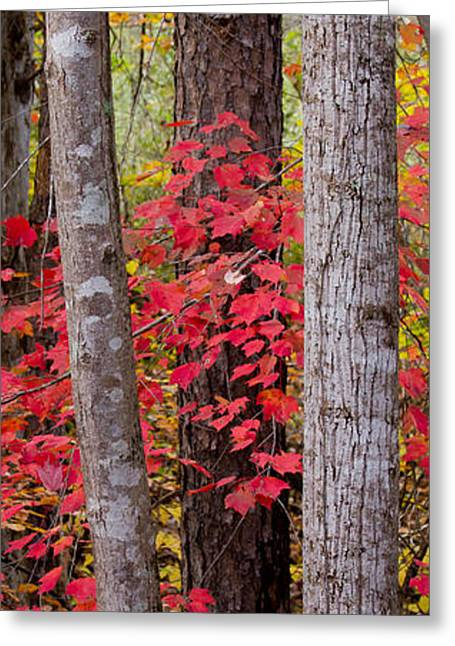 Leaves Through Trees Greeting Card by Nathaniel Kidd