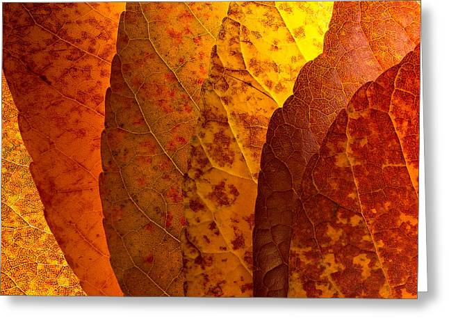 Harvest Time Photographs Greeting Cards - Leaves unmasked Greeting Card by Chris Bordeleau