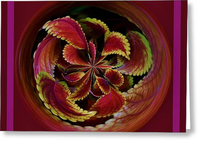 Leaves With Border Orb Greeting Card by Paulette Thomas