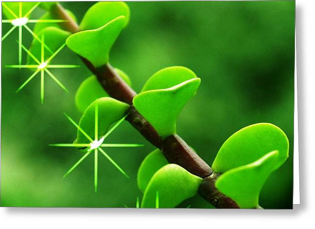 Leaves With Stars Greeting Card by Jyoti Vats