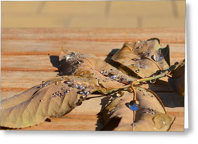 Leaves With Water 1.1 Greeting Card by Cheryl Miller