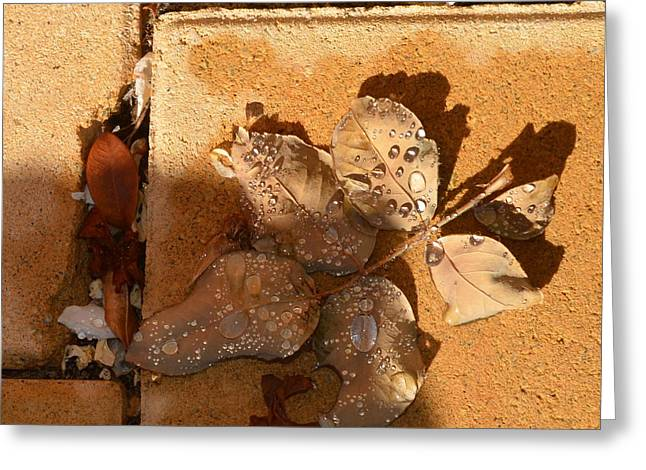 Leaves With Water 1.2 Greeting Card by Cheryl Miller