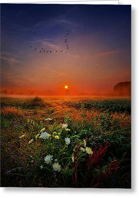 Wild Goose Greeting Cards - Leaving For New Horizons Greeting Card by Phil Koch
