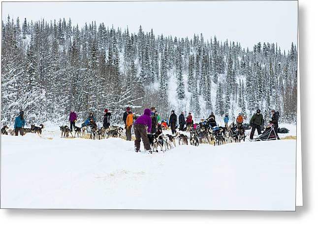 Dog Sled Racing Greeting Cards - Leaving The Paxson Check Point Greeting Card by Tim Grams