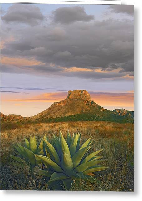 Casa Grande Greeting Cards - Lechuguilla Agave And  Casa Grande Big Greeting Card by Tim Fitzharris