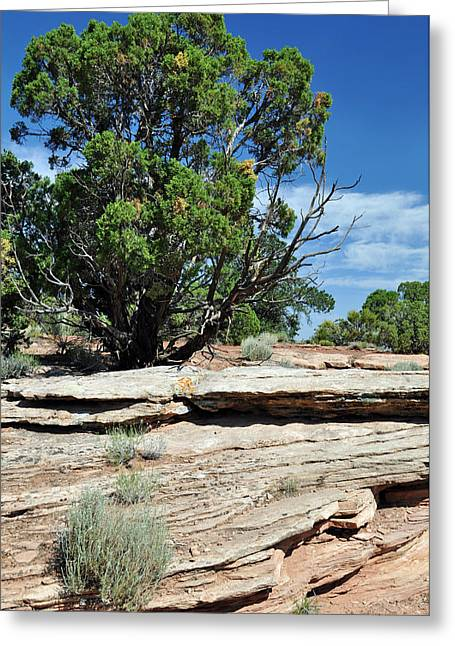 Ledge Photographs Greeting Cards - Ledger Greeting Card by Bruce Gourley