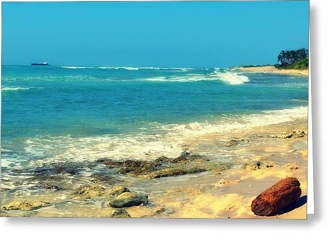 My Ocean Greeting Cards - Leeward Log Greeting Card by Brandy Muses