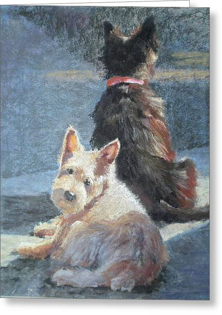 Scottish Terriers Pastels Greeting Cards - Left Behind Greeting Card by Janice Harris